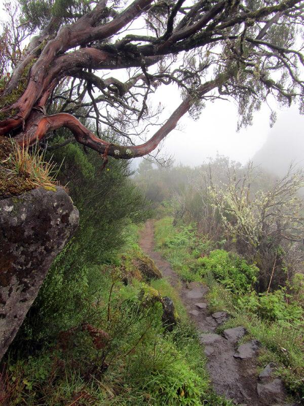 steiniger Weg im Nebel
