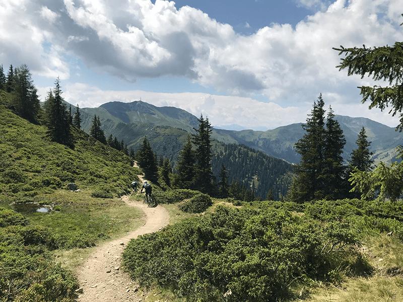 Hakelbergtrail zischen Kiefern und Buschwerk
