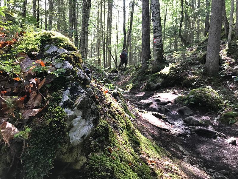 bemooste Felsen entlang des Weges