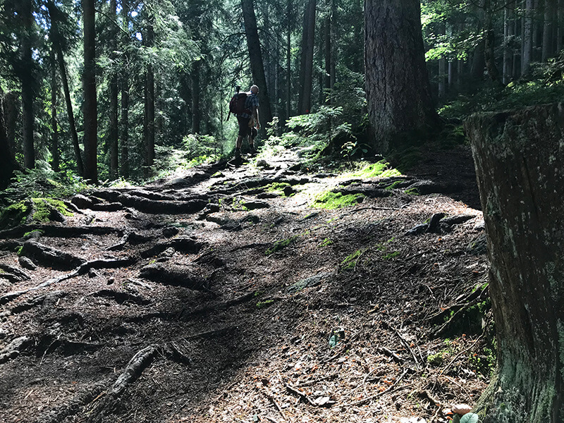 wurzelige Passage durch den Wald