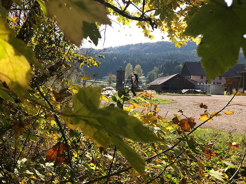Blick durchs Herbstalub auf die Schattenmühle