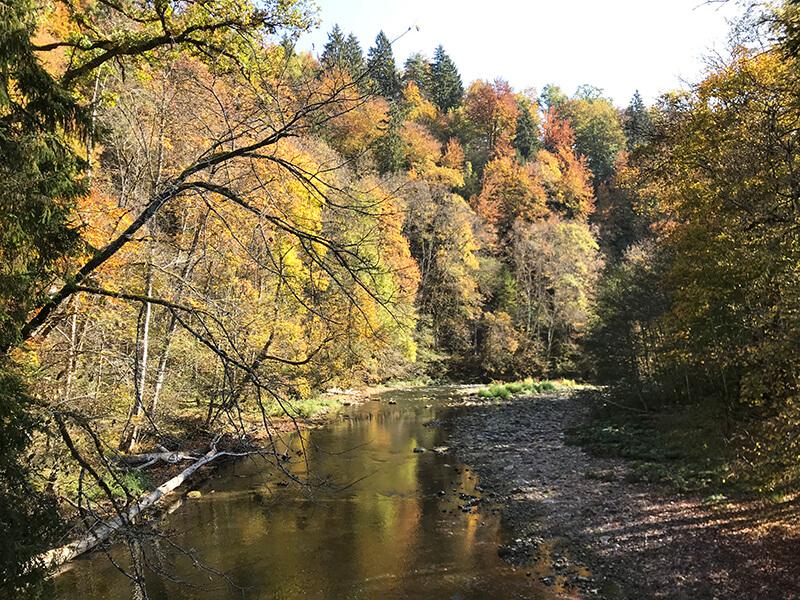 Herbstlaub an den Bäumen entlang der Wutach