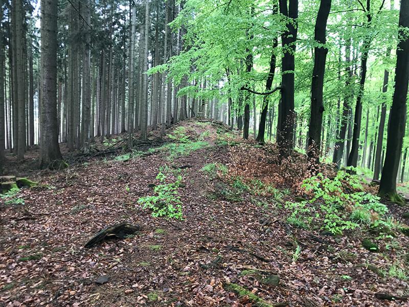 Farbspiel zischen Nadel- und Laubwald
