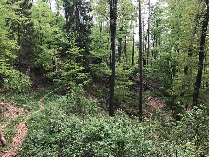 schmaler Pfad durch grünen Wald