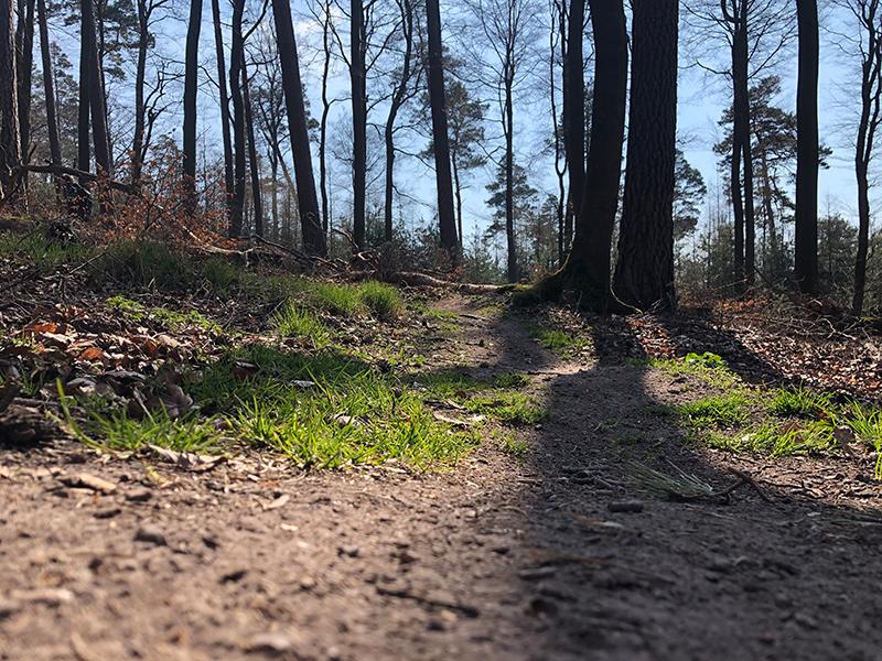 Wurzeln und Tannenzapfen auf dem Trail