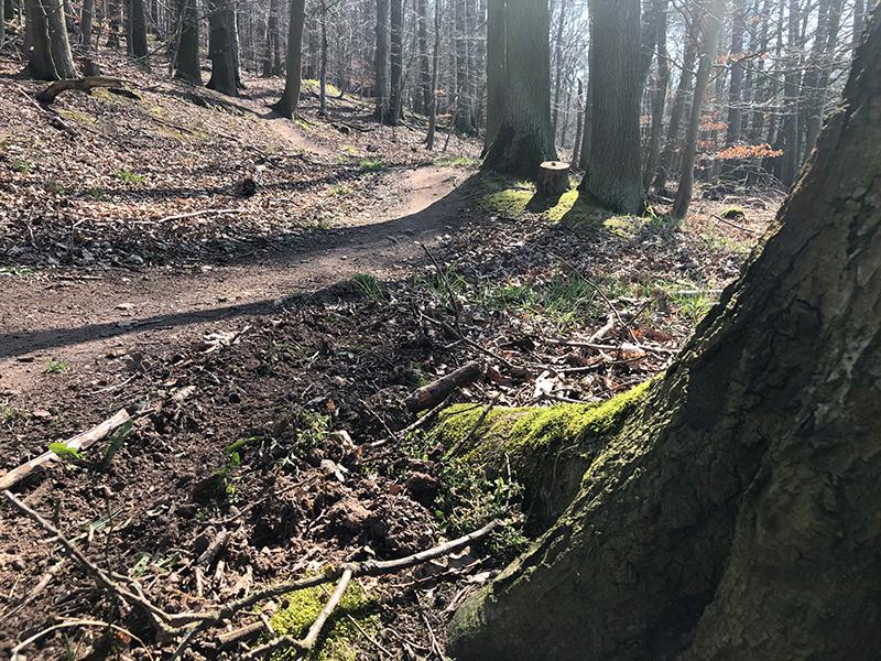 letzte Kurve des Sängersberg Trail