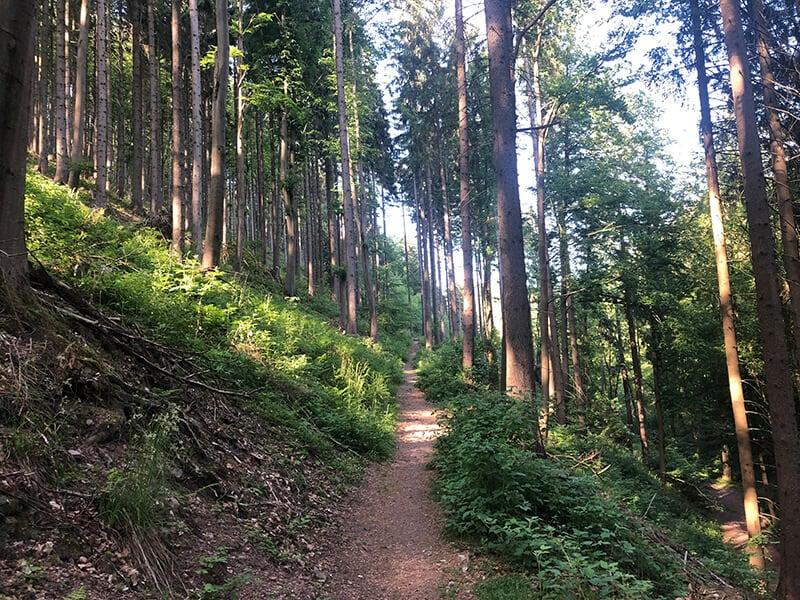 Der Zustieg zum Aschenbergstein im Thüringer Wald