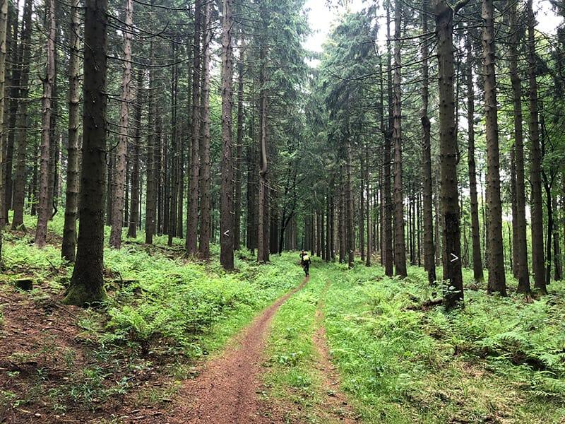 schmaler Trail im Oberwald