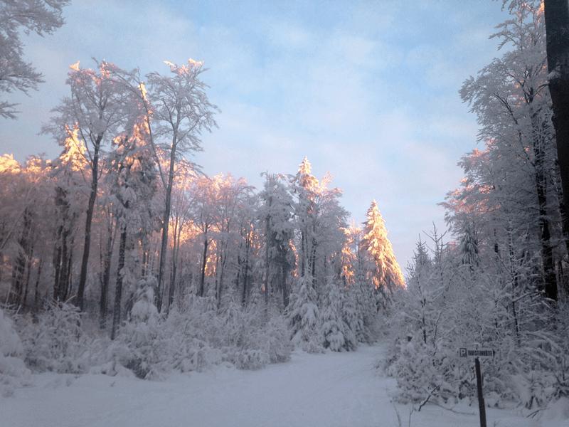 ein Hauch von Sonne in den Baumwipfeln