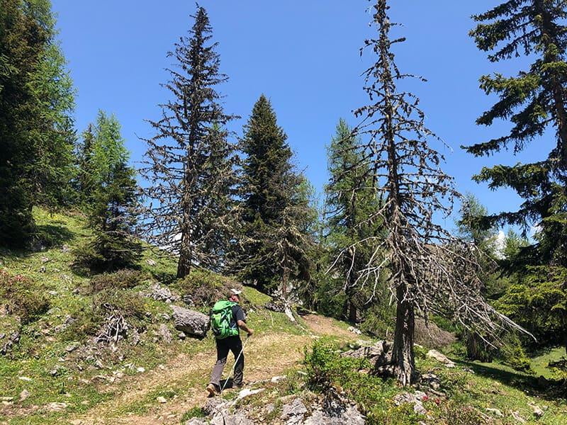 Harry auf dem wieder ansteigenden Bergweg