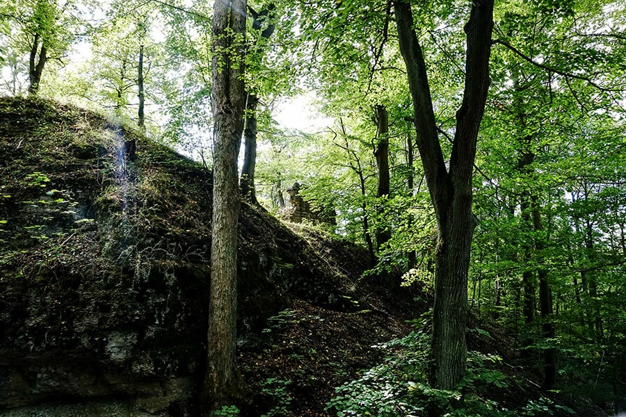 Ruine Habichtsburg im Wald
