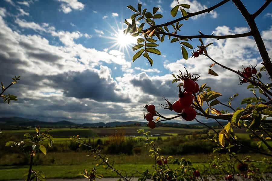 Herbststimmung mit Hagebutten