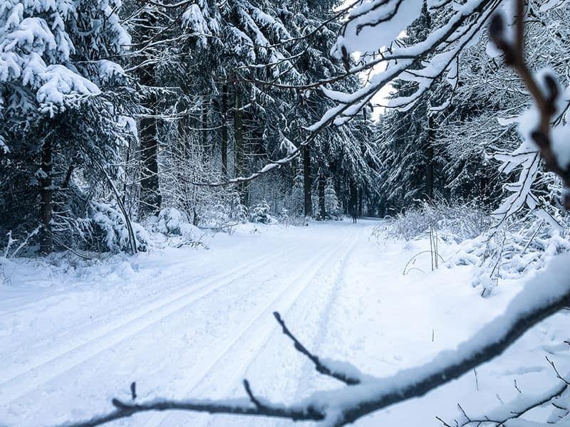 zwischen schneebedeckten Ästen hindurch