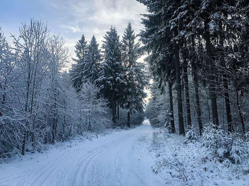 tief verschneite Wälder in der Rhön