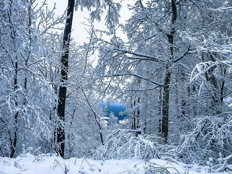 winterlicher Ausblick in Richtung Sandberg