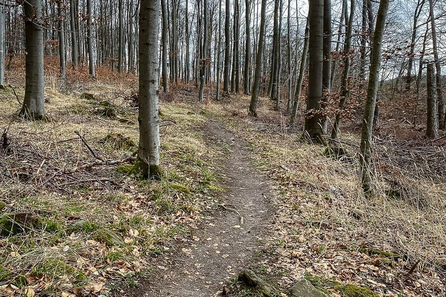 schmale Pfade durch den Wald