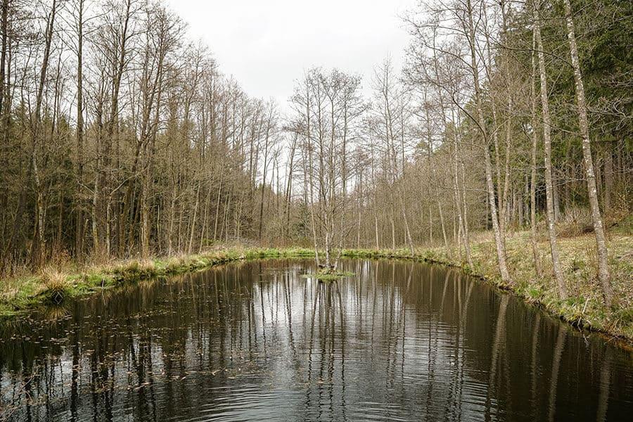kleiner Tümpel im Wald