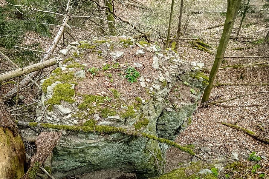 Phonolithblock im Wald
