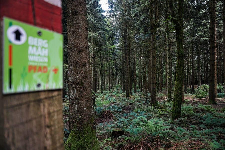 Im Oberwald