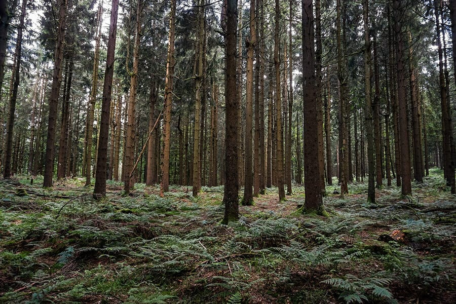 Wie in einem Märchenwald