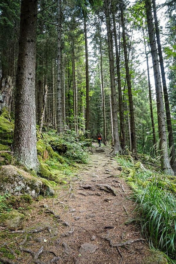 steilerer Anstieg zwischen Nadel- und Laubbäumen