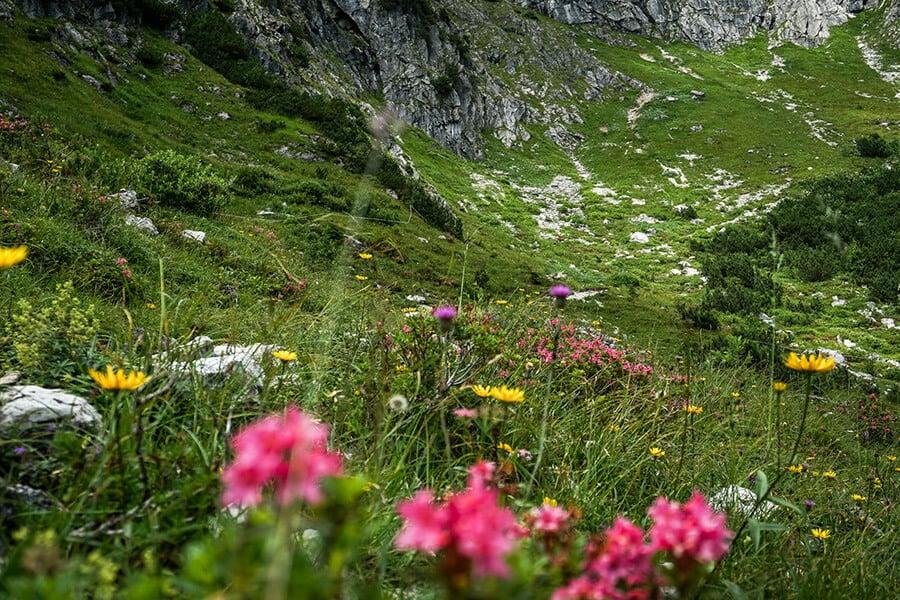 Alpenblumen am Wegesrand