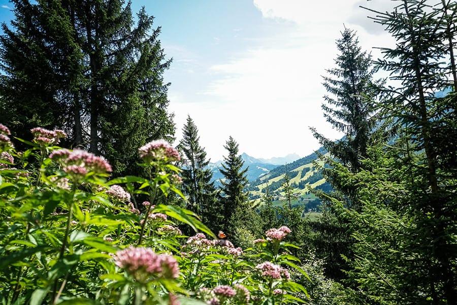 Blick Richtung Tannheimer Tal